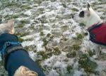 Garthdee dog walker & pet sitter